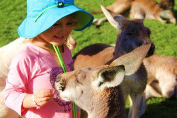 kangourous5