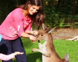 Maman Globe-trotteuse nourrit un kangourou
