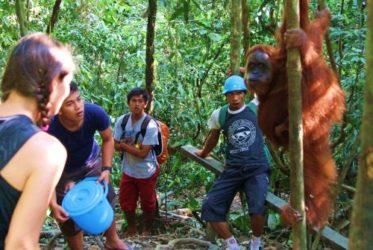 Tarzan & Jane Globe-trotteurs dans la jungle de Sumatra