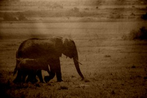 J'affectionne les histoires de brousse...ici, au Kenya