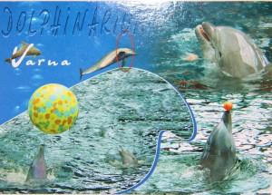 Un Delphinarium de Bulgarie de Daniela.
