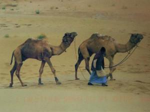 Merci Lynne pour avoir partagé le désert de thar en INDE.