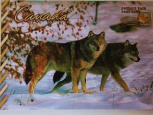 Les loups du Québec ! gracieuseté de grand-papa