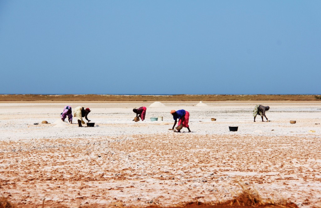 Les marais salants du Sénégal.