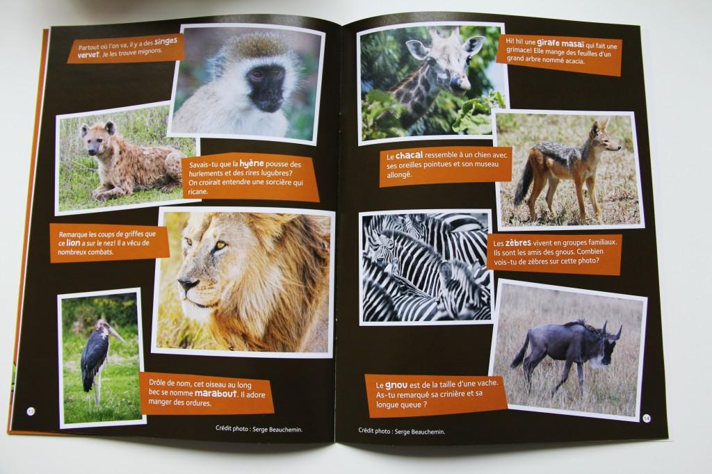 Le résultat: un safari photos pour le bonheur des enfants! Le numéro KÉNYA de Globe-trotteurs juniors met en vedette les clichés de Serge Beauchemin. Voici un aperçu!