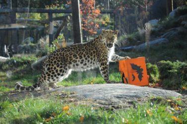 Terminé-Concours Zoo de Granby, c'est l'fun l'automne!