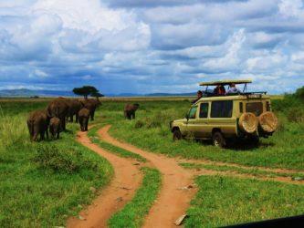 Safari famille en Tanzanie: partez avec Maman Globe-Trotteuse! mars 2016